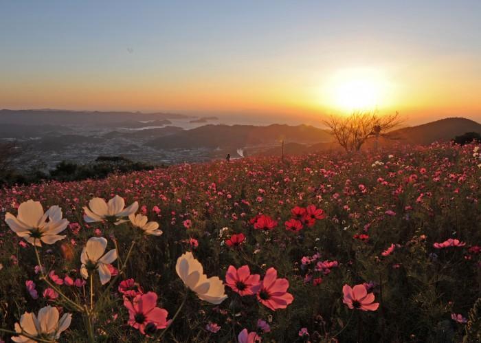 【特選】石垣美子「夕陽に映える」