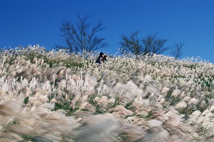 【最優秀賞】西村真佐夫「高原と青空に風の波」