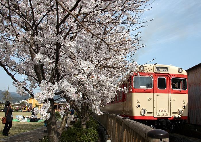 【入選】岩崎州男「春を楽しむ!」