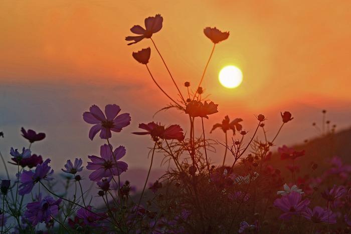 【入選】上野山典男「コスモスパークの夕日」