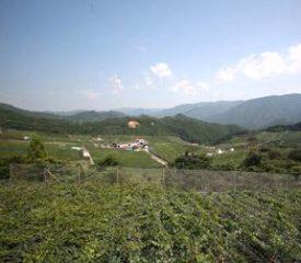 有田巨峰村