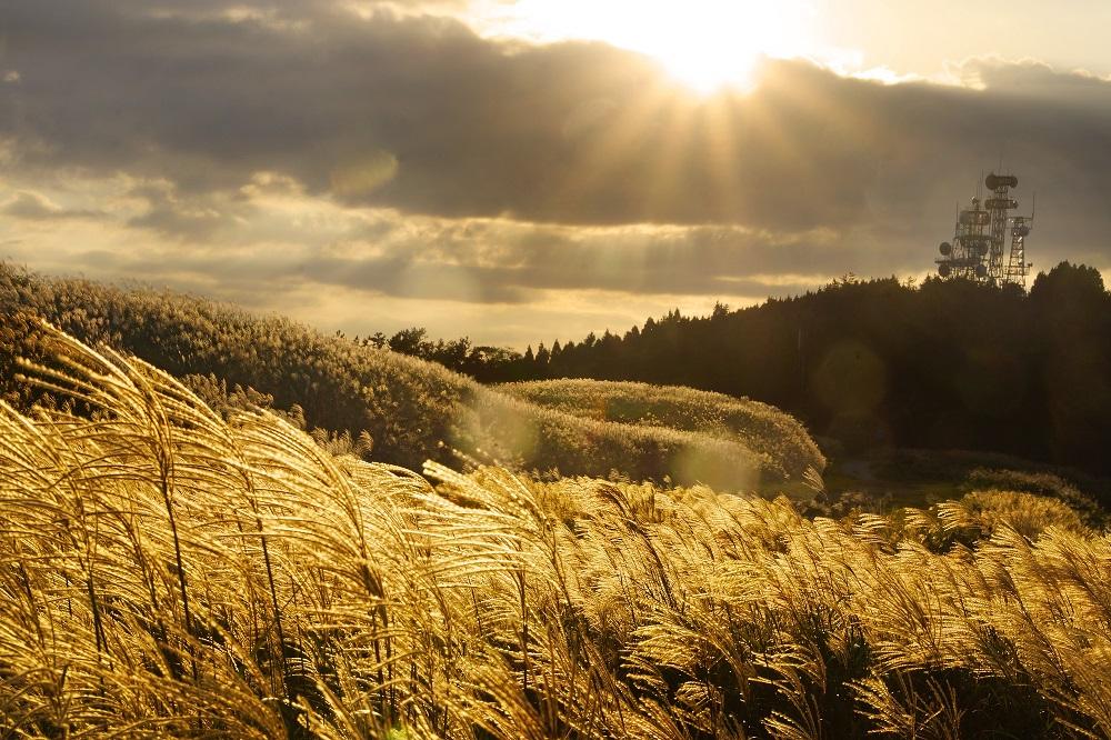 【特選】杉本博「金色の草原」