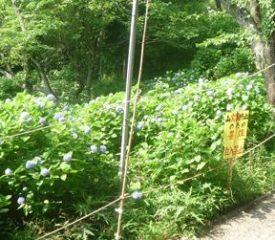 長谷観音桜の森公園